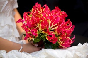 Gloriosa Lilies