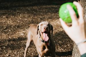 Dog Wedding Daycare